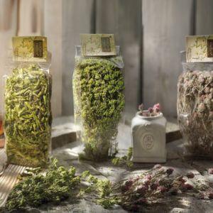 Dzikie zioła i herbaty ziołowe